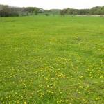 Golfzentrum-Binz (3 von 22)